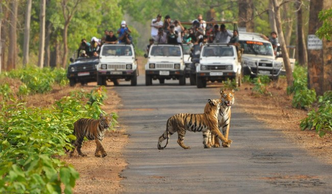 Photographers At Kanha National Park